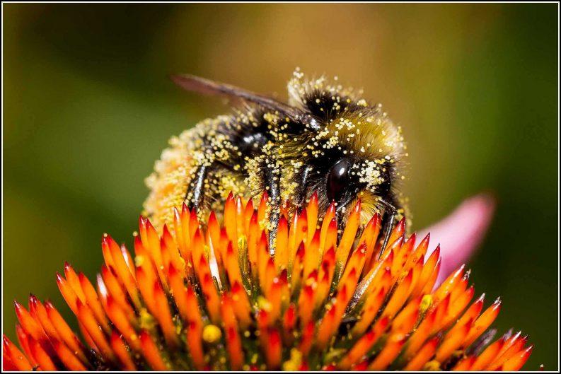Pollinators facing precipitous decline in numbers, report reveals