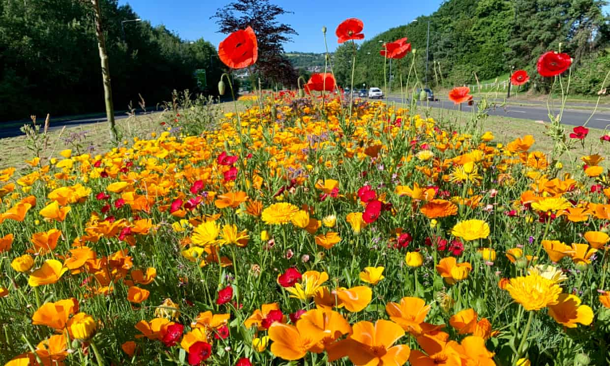 'The impact is tremendous': readers on wildflower verges