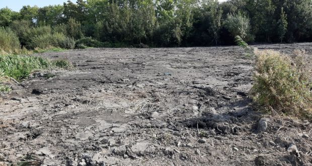 Ecologists outraged as Dublin nature reserve is 'flattened like a car park'