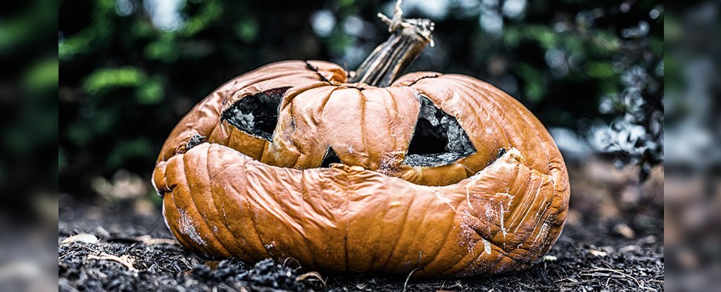 Turns Out Pumpkins Are Primarily Grown to End Up as Landfill Waste After Halloween