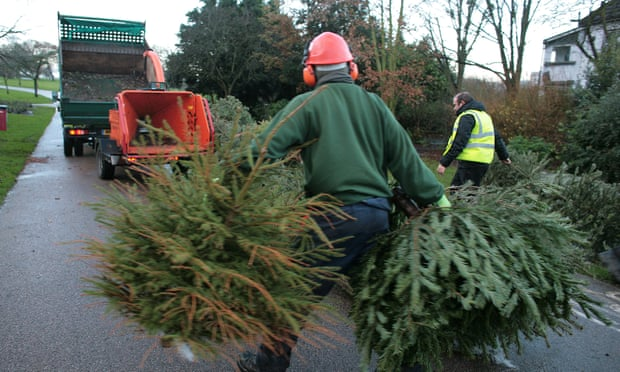 Are real or fake Christmas trees better for the planet?