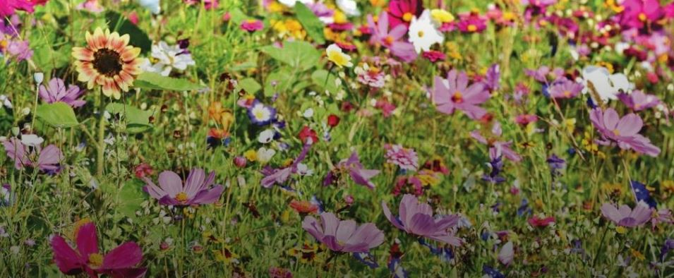 10 Easy Things To Do In The Garden During Quarantine