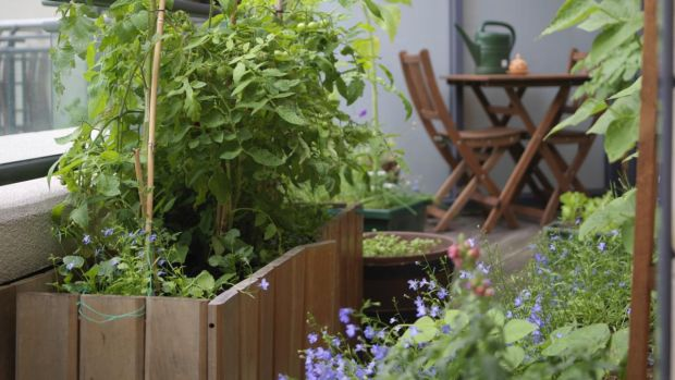 Balcony bounty: Easy-grow herbs and salads that thrive in small spaces