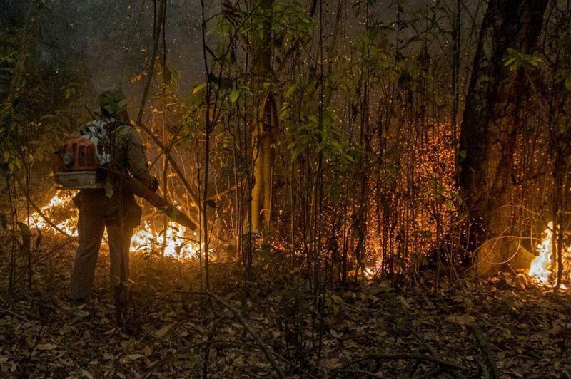Forest fires devastate Brazil's Pantanal tropical wetlands